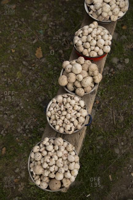 Wild mushrooms at a street market in east Georgia