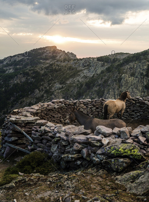 Horses in a small stone enclosure in a mountainous region on the island of Corsica
