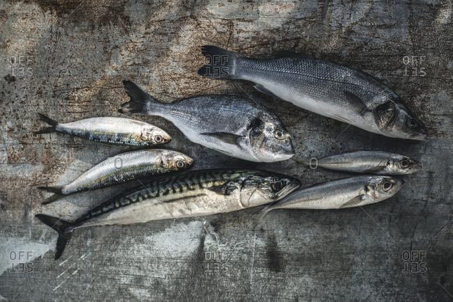 Raw fish, Sea bream, sea bass, mackerel and sardines