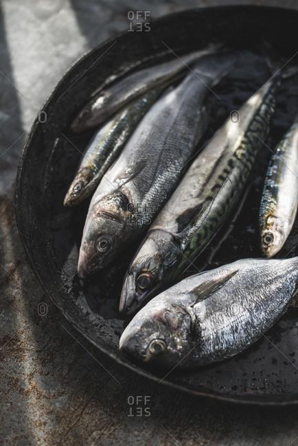 Raw fish, Sea bream, sea bass, mackerel and sardines in pan