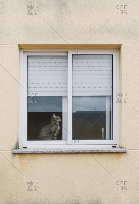 Tabby cat sitting behind window of a residential house