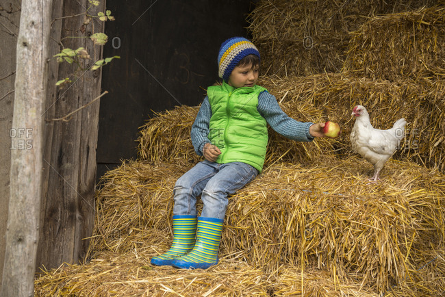 Little boy sitting on straw in the stable and feeding apple to chicken bird, Bavaria, Germany