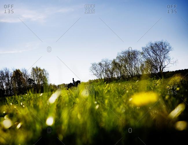 Horse in the horizon