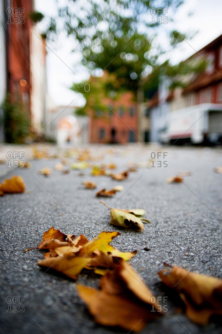 Leaves on a street
