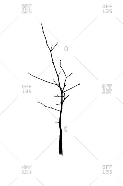 Illustration of a tree branch