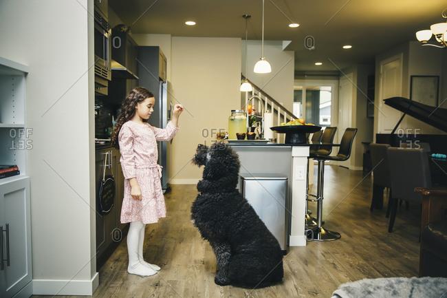 Girl training dog in kitchen