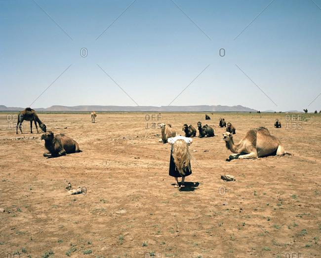 Woman bending over next to a caravan of camels