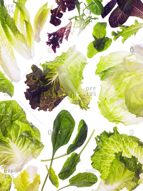 A variety of lettuce on a white background