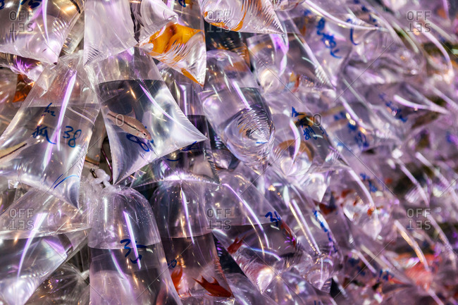 Fish in bags at a market