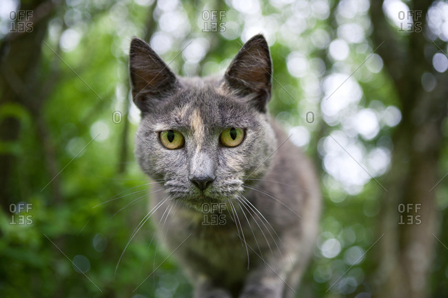 Gray cat in a forest