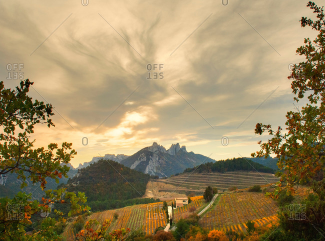 Distant view of vineyards and Les Dentelles de Montmirail in autumn, Provence, France