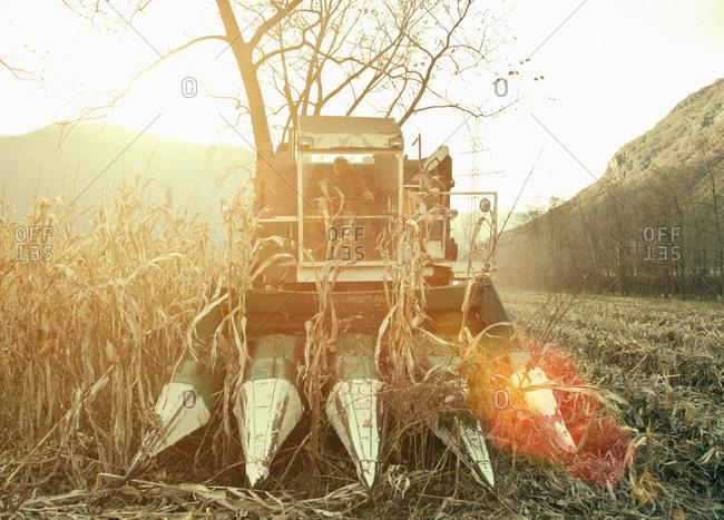 Farmer driving harvester in sunlit field, Premosello, Verbania, Piemonte, Italy