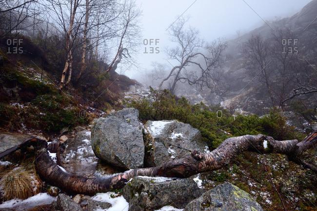 Fallen tree and rocks in mist near Lysefjord, Rogaland County, Norway