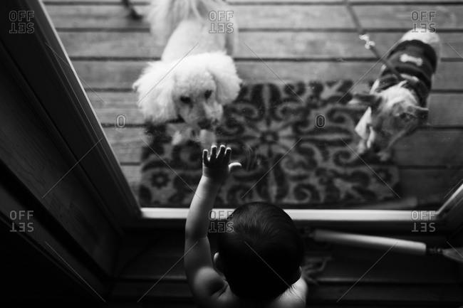 Boy looking at dogs through door