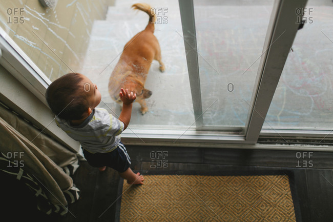 Toddler looking at dog through door
