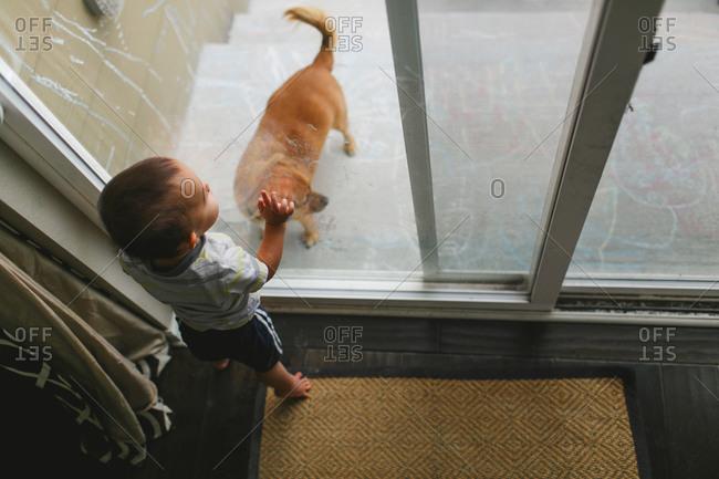 Toddler looking at dog through door
