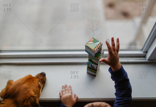Dog and boy at a window