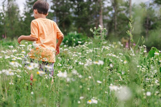 Boy walking in tall plants