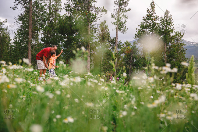 Man and boy in mountain wildflowers