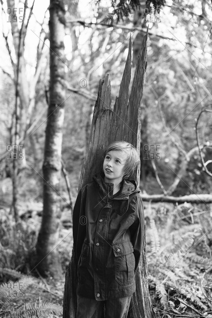 Boy standing in front of a damaged tree trunk