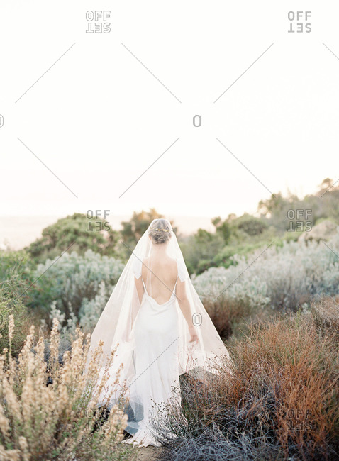 Rear view of a bride walking through field of bushes