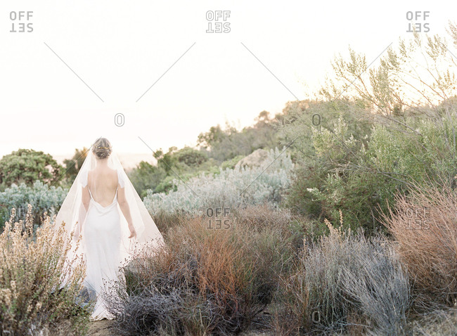 Bride walking through field of bushes
