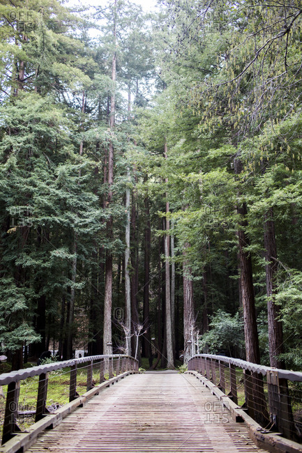 Wooden walkway through tall trees in forest, Big Sur, California, United States