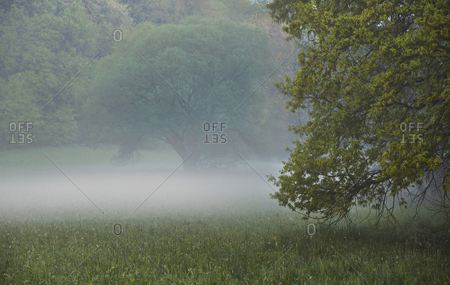 Fog and trees in rural meadow