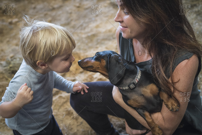Caucasian mother, son and pet dog playing in barn