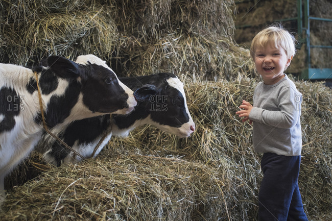 Caucasian boy laughing on haystacks near cows