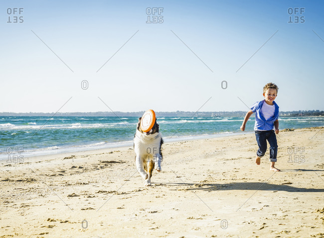 Caucasian boy playing with dog on beach