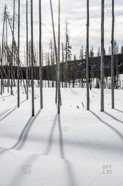 Bare trees and shadows in snowy remote field