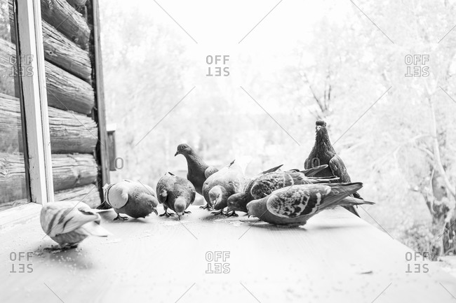 Pigeons grazing on porch