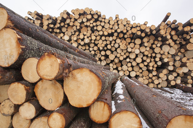 Close up of wooden log pile