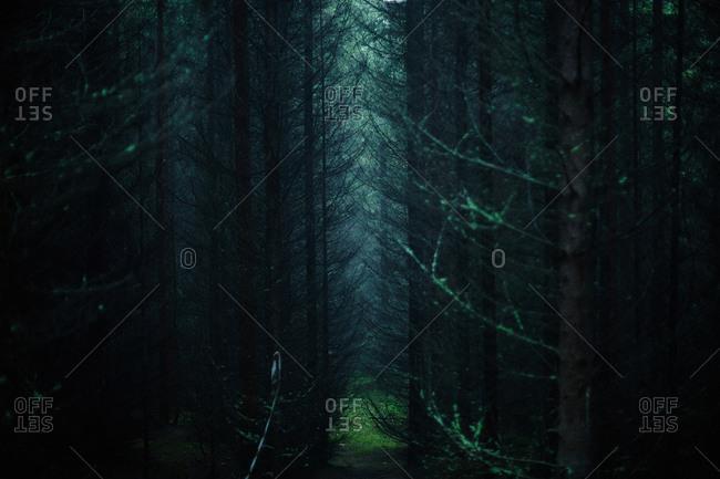 Sunlight through trees in dark forest
