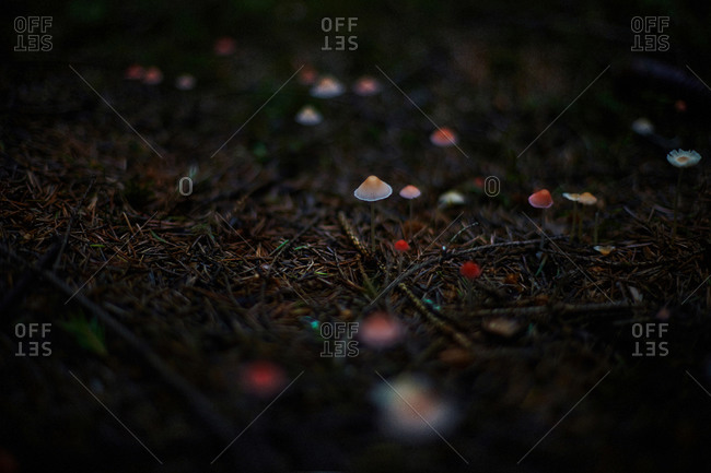Close up of mushrooms growing in dark forest