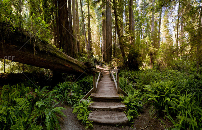 Steps through fallen trees in lush forest