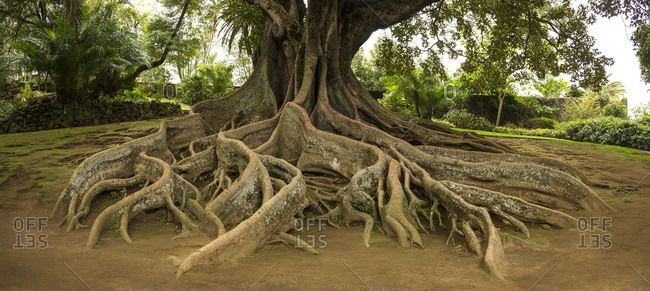 Elevated tree roots in park