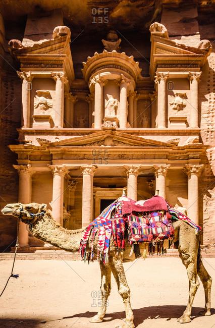 Camel wearing harness by ancient building, Petra, Jordan, jordan