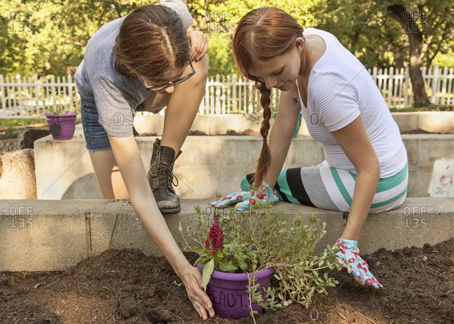 Women planting seedling in garden