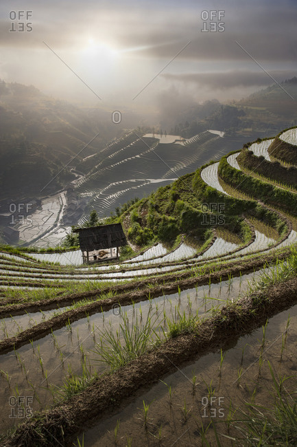 Rice paddy hills in remote landscape