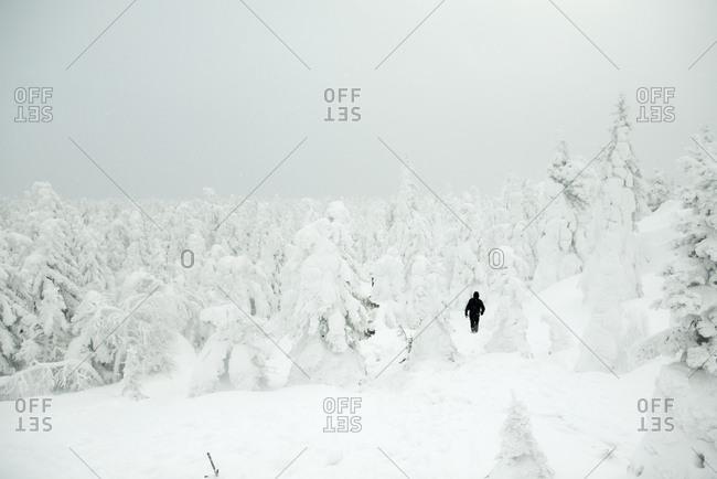 Caucasian hiker walking in snowy forest