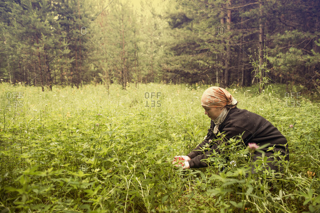 Caucasian woman picking berries in field