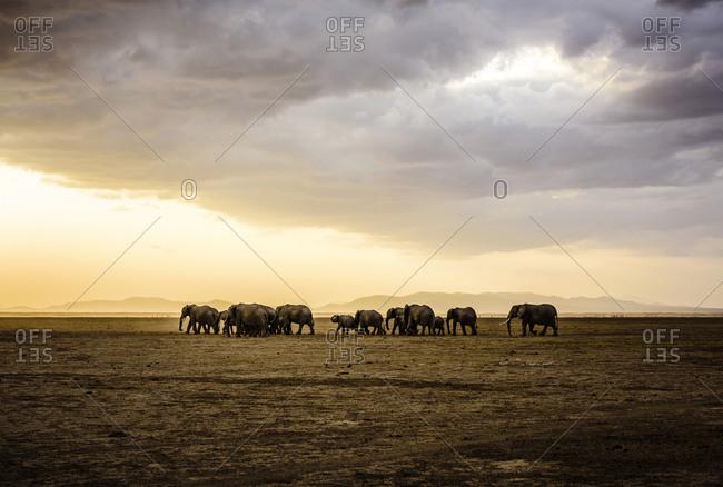 Herd of elephants in savanna landscape