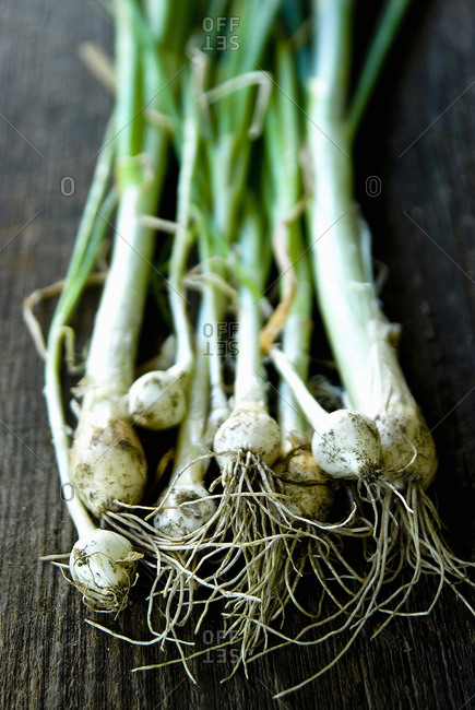 Close up of green onion bulbs