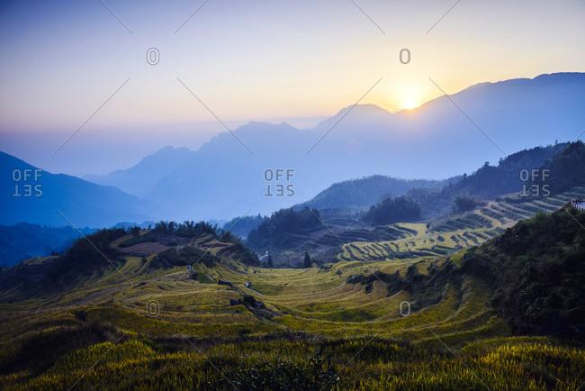 Rice fields in rural landscape