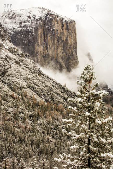 Snowy treetops and mountain in Yosemite National Park, California, United States