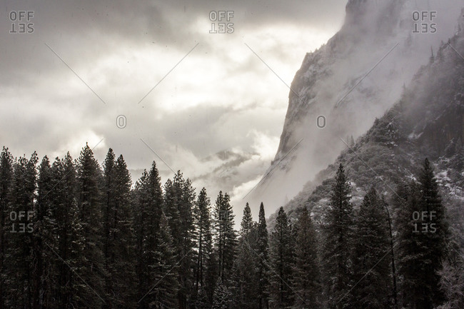 Forest and mountains in Yosemite National Park, California, United States