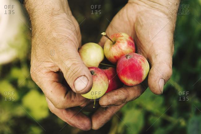 Caucasian farmer holding fruit