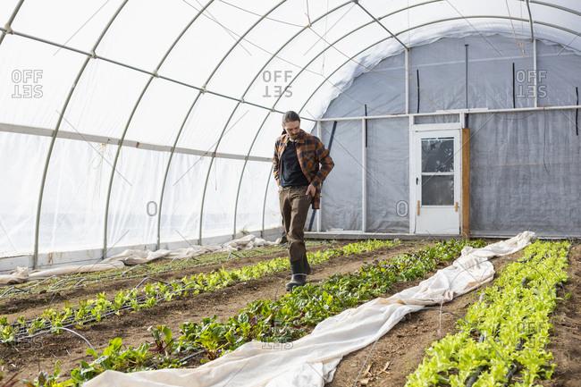 Caucasian farmer walking in greenhouse